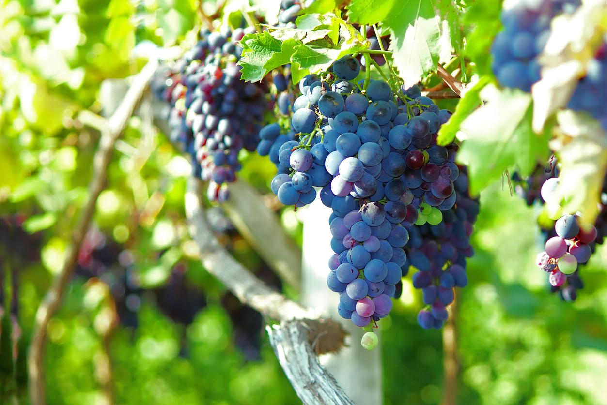 Wine & Travel – Italy